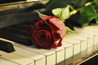 Rose On Piano - Obrázkek zdarma