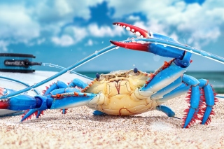Blue crab Picture for Android, iPhone and iPad