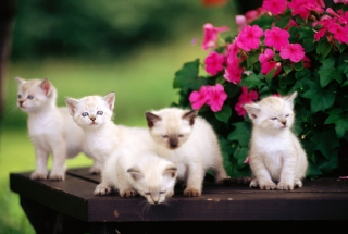Free Cute Little Kittens Picture for Android, iPhone and iPad