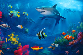 Shark in Perth, Western Australia - Obrázkek zdarma pro Samsung Galaxy Q