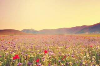 Field Of Wild Flowers Background for Android, iPhone and iPad
