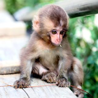 Little Monkey - Obrázkek zdarma pro 128x128