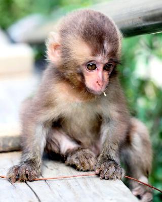 Little Monkey - Obrázkek zdarma pro 176x220