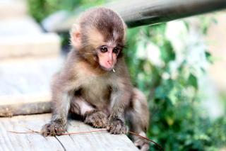 Little Monkey - Obrázkek zdarma pro 1600x1280
