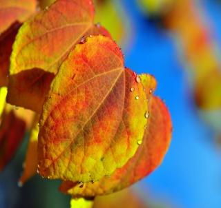 Leaf And Drops - Obrázkek zdarma pro iPad mini
