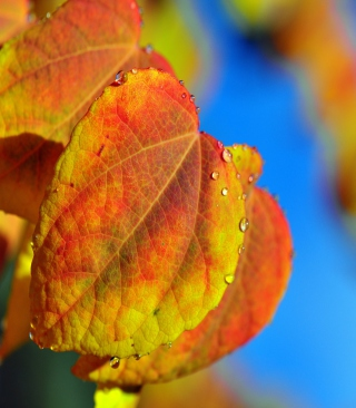 Leaf And Drops - Obrázkek zdarma pro 132x176