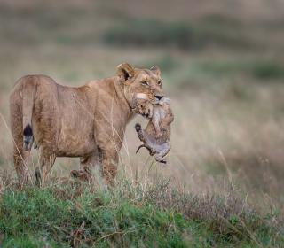 Moment Of Wildlife - Obrázkek zdarma pro 1024x1024