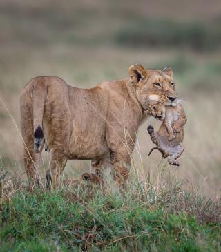 Moment Of Wildlife - Obrázkek zdarma pro 240x432