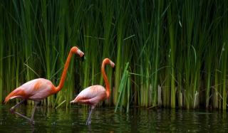 Two Flamingos - Obrázkek zdarma pro Fullscreen Desktop 1280x960