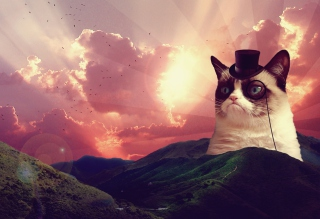 Grumpy Cat Background for Android, iPhone and iPad