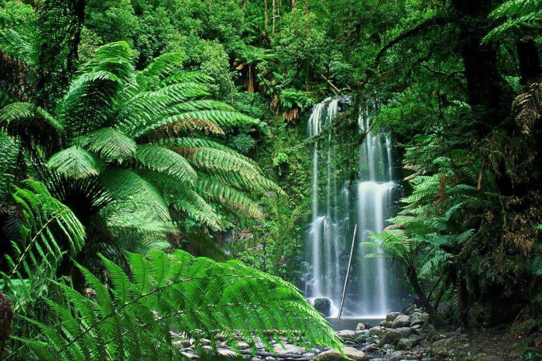 Животные и растения тропических лесов 2 класс доклад фото 5