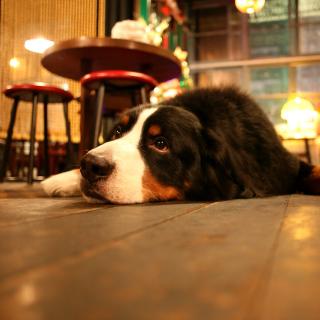 Dog in Cafe - Obrázkek zdarma pro 1024x1024