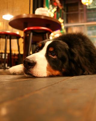 Dog in Cafe - Obrázkek zdarma pro 320x480