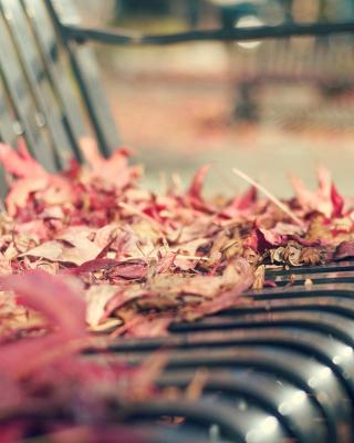 Macro autumn bench - Obrázkek zdarma pro Nokia X1-01