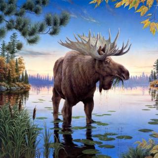 Elk - Obrázkek zdarma pro iPad
