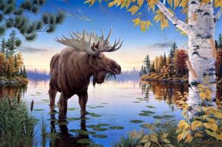 Elk - Obrázkek zdarma pro 800x480