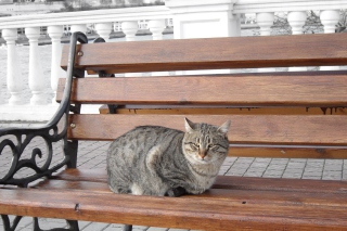 Free Cat On A Bench Picture for Android, iPhone and iPad