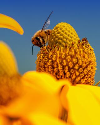 Honey bee - Obrázkek zdarma pro 480x800
