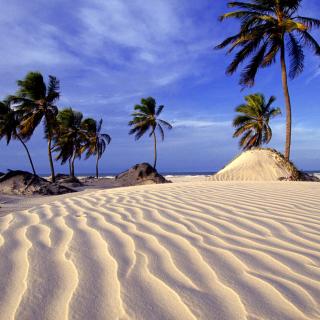 Bahia Beach Resorts Puerto Rico - Obrázkek zdarma pro 128x128