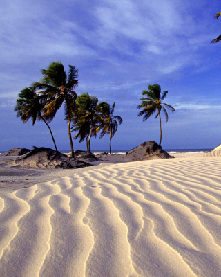 Bahia Beach Resorts Puerto Rico - Obrázkek zdarma pro 128x160