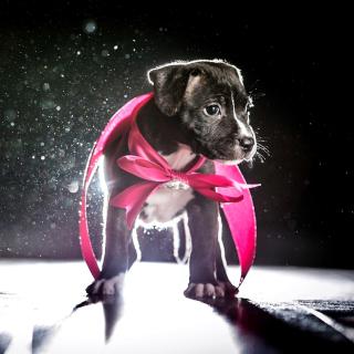 Puppy as Present - Obrázkek zdarma pro 208x208