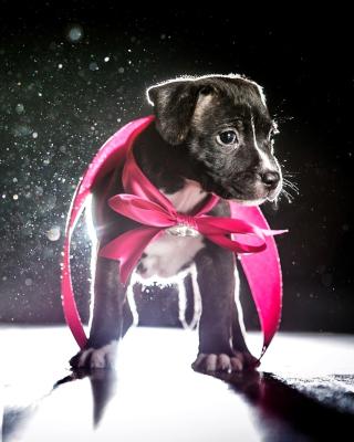 Puppy as Present - Obrázkek zdarma pro 768x1280