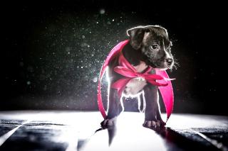 Puppy as Present - Obrázkek zdarma pro Fullscreen 1152x864