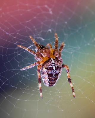 Spider on a Rainbow - Obrázkek zdarma pro 360x640