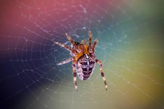 Spider on a Rainbow - Obrázkek zdarma pro 1024x600