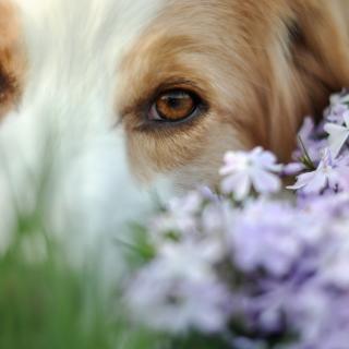 Best Friend Eyes - Obrázkek zdarma pro 320x320