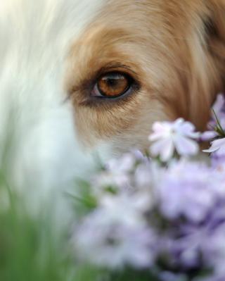 Best Friend Eyes - Obrázkek zdarma pro Nokia Asha 308