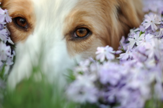 Best Friend Eyes - Obrázkek zdarma pro Widescreen Desktop PC 1920x1080 Full HD