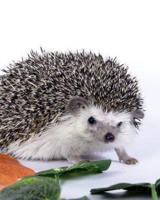 Hedgehog - Obrázkek zdarma pro Nokia Asha 502
