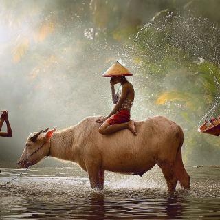 Holy Cow Animal - Obrázkek zdarma pro iPad mini