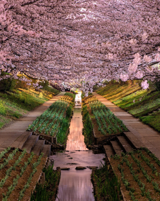 Wisteria Flower Tunnel in Japan - Obrázkek zdarma pro Nokia C-Series