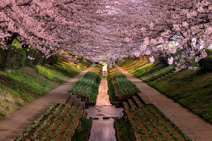 Wisteria flower tunnel in japan wallpaper for android Wisteria flower tunnel path in japan