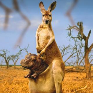 Kangaroo and Hippopotamus - Obrázkek zdarma pro 208x208