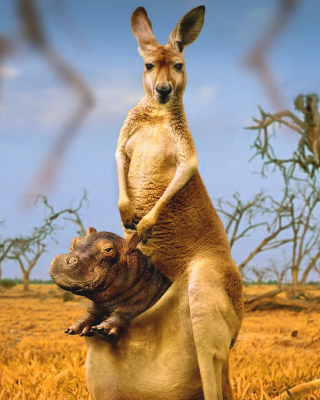 Kangaroo and Hippopotamus - Obrázkek zdarma pro Nokia X2