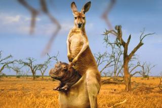 Kangaroo and Hippopotamus - Obrázkek zdarma pro Widescreen Desktop PC 1680x1050
