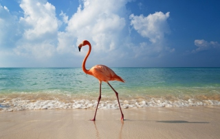 Pink Flamingo - Obrázkek zdarma pro Fullscreen Desktop 1280x960