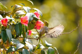 Bird Flying - Fondos de pantalla gratis para LG E400 Optimus L3