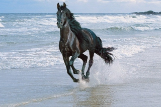 Black Horse Background for Android, iPhone and iPad