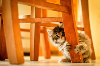 Kitten Hiding Behind Chair Leg Wallpaper for Android, iPhone and iPad