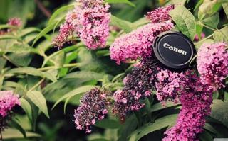 Canon Cap - Obrázkek zdarma pro Samsung Galaxy Nexus