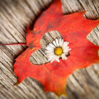 Macro Leaf and Flower - Obrázkek zdarma pro 2048x2048