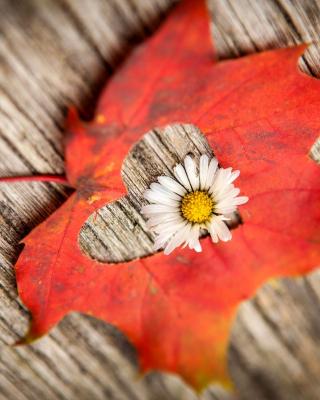 Macro Leaf and Flower - Obrázkek zdarma pro Nokia Asha 300