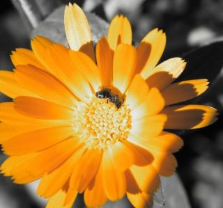 Golden Flower - Obrázkek zdarma pro 128x128