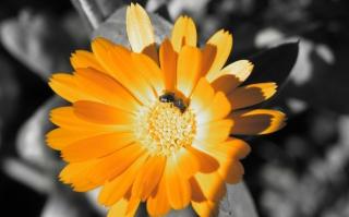 Golden Flower - Obrázkek zdarma pro 1152x864