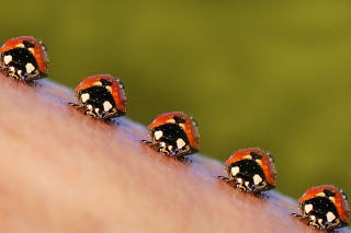 Ladybugs Background for Android, iPhone and iPad