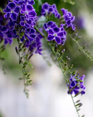 Durante Flowers - Obrázkek zdarma pro Nokia Asha 310